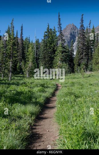 Trail Cuts Through Mountain  Meadow near Bend, Oregon - Stock Image