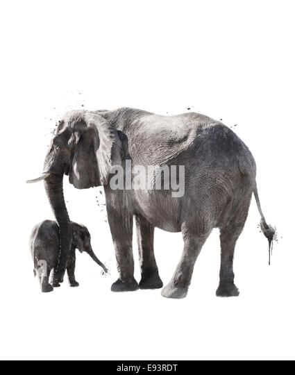 Watercolor Digital Painting Of  Elephants - Stock-Bilder