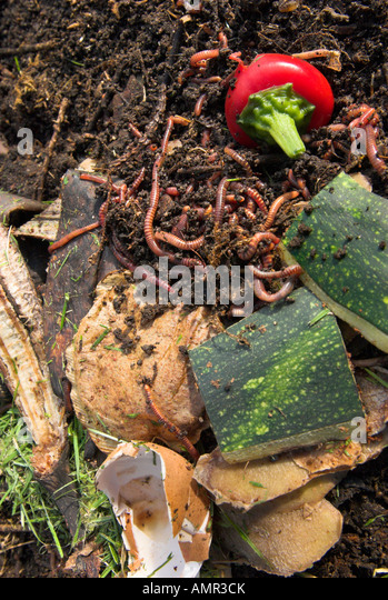 Stock Image Commercial Kitchen Compost