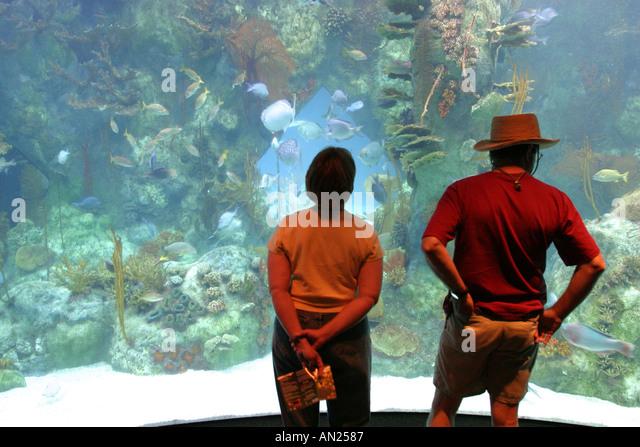 New Mexico Albuquerque Biological Park Aquarium gallon shark tank W - Stock Image