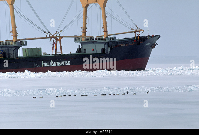 Adelie penguin Pygoscelis adeliae Group travelling on sea ice Italian cargo vessel beyond McMurdo Sound Antarctica - Stock Image
