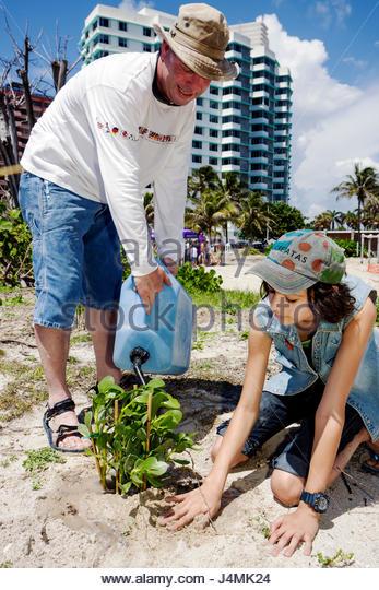 Miami Beach Florida Beach View Park Surfrider Foundation Coastal Dune Restoration volunteer environment ecology - Stock Image