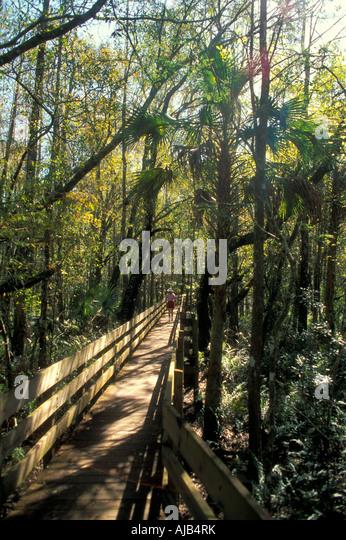 Sanibel Island, Florida, fl, fla, boardwalk walkway through thick tangle of trees, palm trees lee county - Stock Image