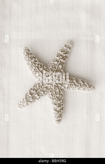 Black and White image of starfish on linen background - Stock Image
