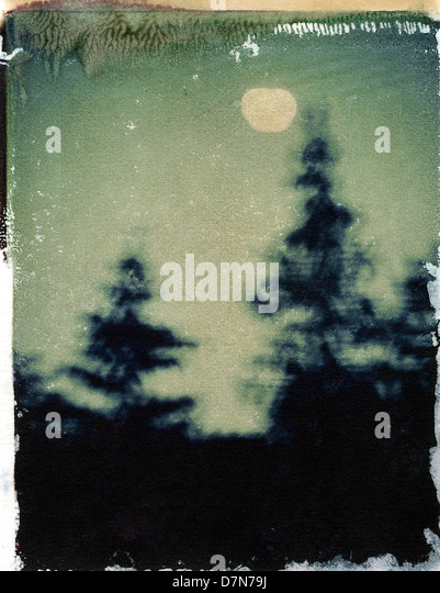 Night sky with trees and moon, polaroid transfer, ©mak - Stock Image
