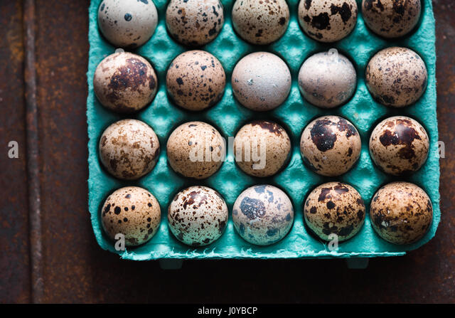 Quail eggs in the container on the old metal background top view - Stock Image