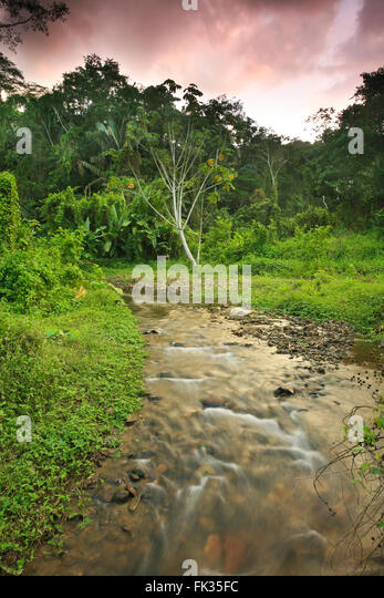 Sunset in the rain forest near Cana in the Darien national park, Republic of Panama. - Stock-Bilder