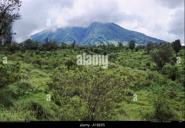 Virunga mountains habitat of the mountain grillas Uganda - Stock Image