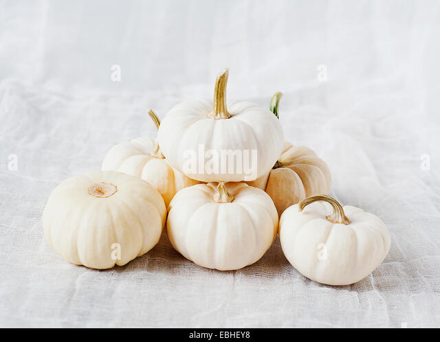 Small white pumpkins - Stock Image