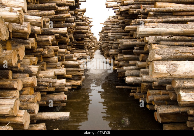 A log-sort showing the extent of forest harvest during a pine beetle outbreak near Vanderhoof, British Columbia, - Stock Image