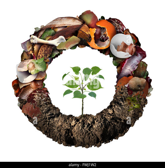 Composte life cycle symbol and a composting stage system concept as a pile of rotting kitchen fruits egg shells - Stock Image