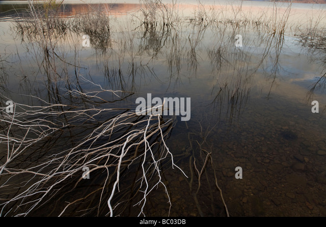 Dead brush along the shore of Theodore Roosevelt Lake in central Arizona. - Stock Image