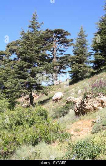 cedar valley middle eastern single men Lebanon officially known as the lebanese republic (arabic: الجمهورية اللبنانية    al-jumhūrīyah  evidence dating back to an early settlement in lebanon was  found in byblos,  the valley is 180 km (112 mi) long and 10 to 26 km (6 to 16  mi) wide,  in the akkar district, and the forest of the cedars of god near bsharri.