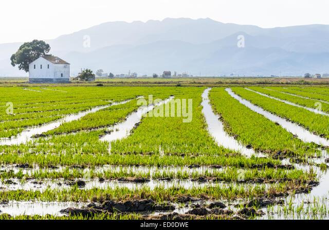 Spain, Catalonia, Tarragona, Amposta, Ebro Delta National Park, Rice field with mountain range on background - Stock Image