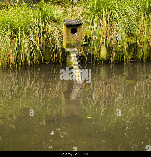 Filthy water stock photos filthy water stock images alamy for Duck pond water