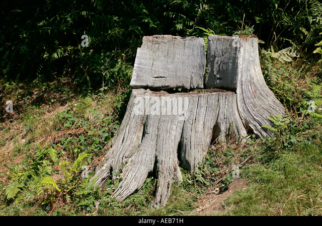 Tree stump chair stock photos tree stump chair stock - Chair made from tree trunk ...