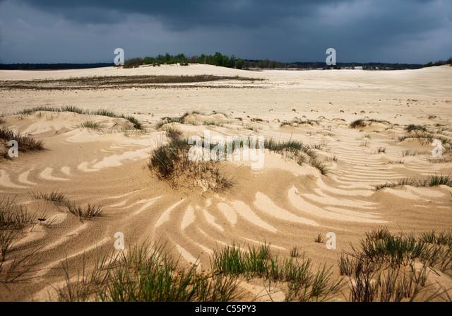 The Netherlands, Loon op Zand, National Park De Loonse en Drunense Duinen. Sand landscape. - Stock-Bilder