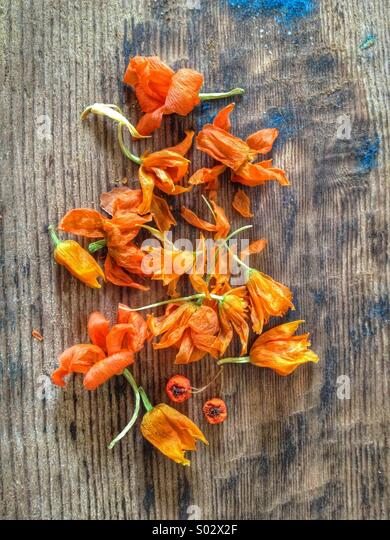 Orange flowers - Stock Image