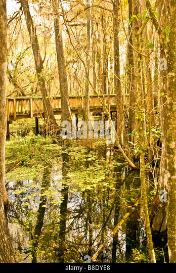 Florida Everglades raised boardwalk over water at Kirby Storter Roadside Park in the Big Cypress National Preserve - Stock Image