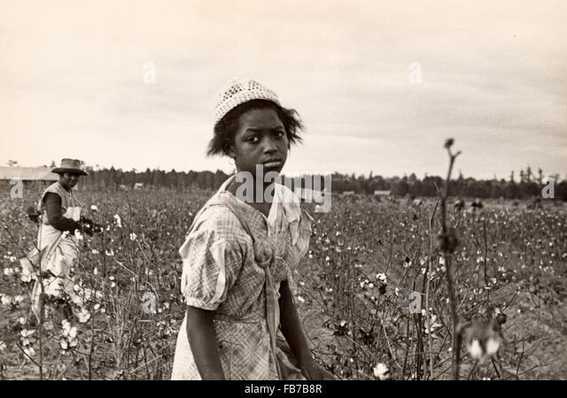 Cotton pickers, cotton picking, America, 1930's - Stock Image