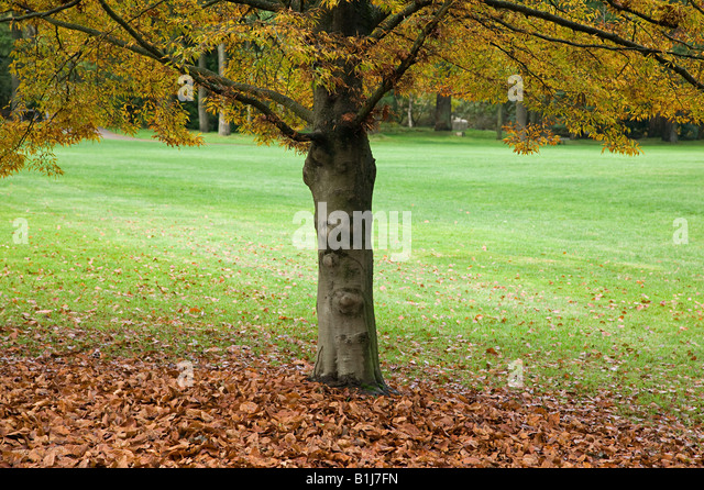 Tree in botanical garden - Stock Image
