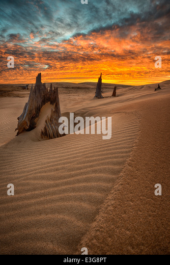 Dawn over Western Michigan sand dunes, with ancient tree remains from a time past. - Stock Image