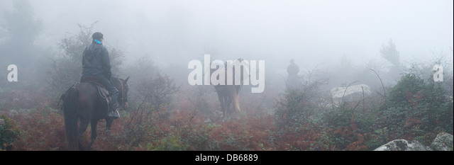 People horse riding in misty forest - Stock Image