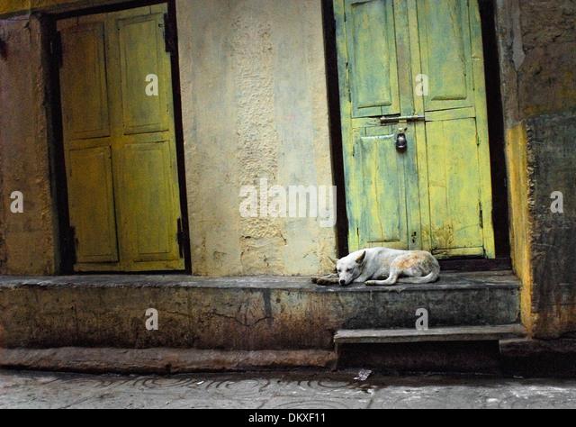 Sleeping Dog in Doorway Varanasi India - Stock-Bilder