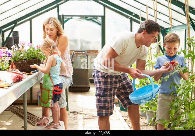 Family Working Together In Greenhouse - Stock Image