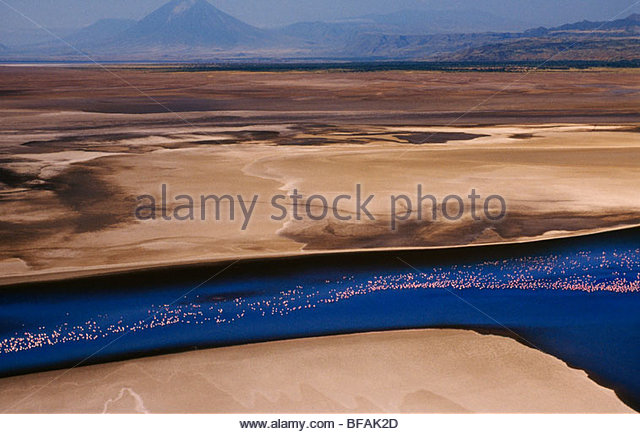 Flamingos in flight at Lake Natron (aerial), Kenya - Stock Image
