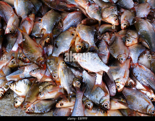 Close up of fish in market, Vietnam - Stock Image