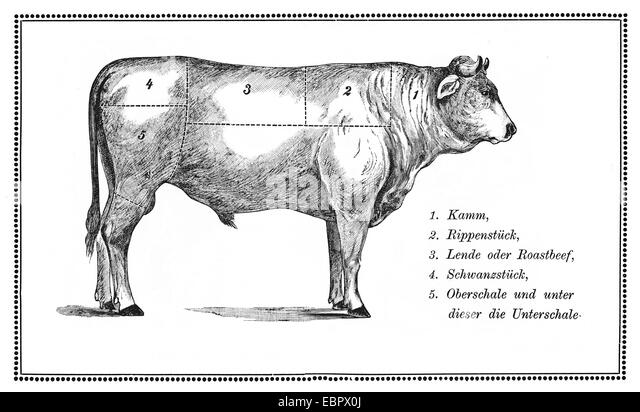 cuts of beef illustration stock photos  u0026 cuts of beef