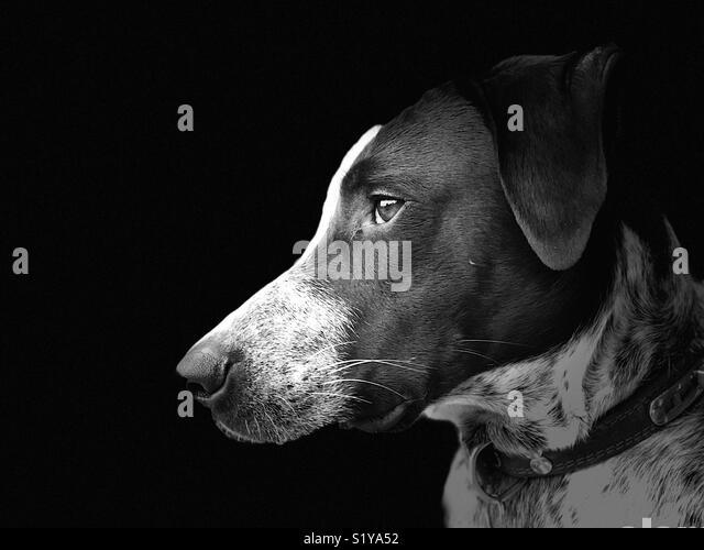 Black and white photo of dog - Stock Image