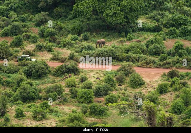 Lake Manyara, Tanzania Tourists encounter elephant on safari - Stock-Bilder