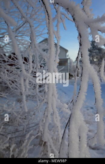 Frost is covering twigs on a cold winter day, - Stock Image