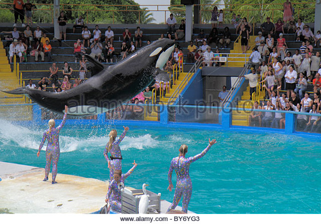 Miami Key Biscayne Florida Miami Seaquarium Lolita killer whale orca 40th anniversary performance jumping trainers - Stock Image