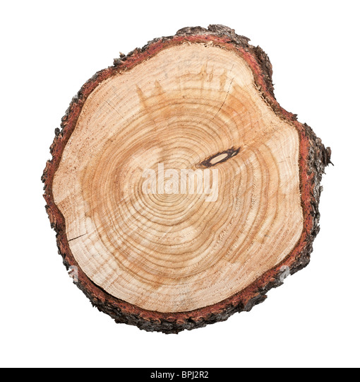 Top view of a tree stump isolated on white background - Stock Image