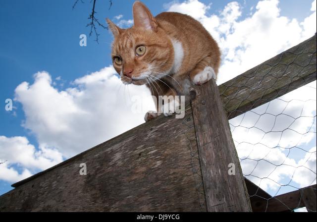 curious cat - Stock Image