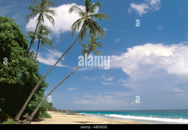 tropics tropical beach beaches Tobago Black Rock Beach palm trees nobody - Stock Image