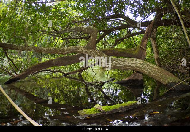 Fallen branches on the shoreline of a jungle river in Bonito, Mato Grosso do Sul Brazil - Stock-Bilder
