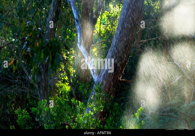 Warrawong Earth Sanctuary Australia - Stock Image
