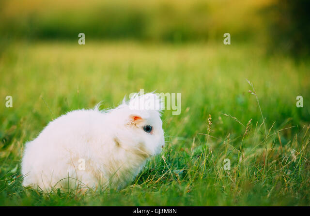 lop eared bunny stock photos lop eared bunny stock images alamy. Black Bedroom Furniture Sets. Home Design Ideas