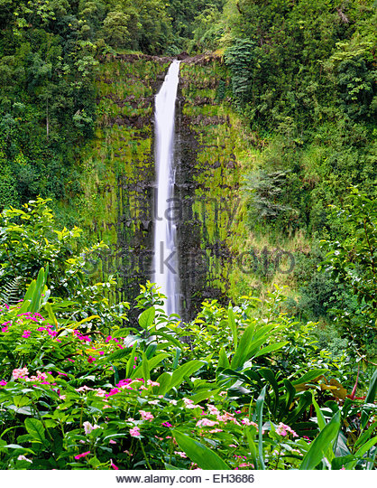 Akaka Falls.  The Big Island, Hawaii. - Stock Image
