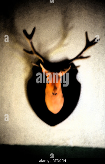 a deer head mounted on a wall, hunter's trophy - Stock Image