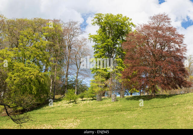 Lancelot Capability Brown GardensStock Photos and Images