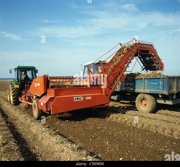 John Deere tractor & AMAC elevator harvesting topped potato crop - Stock Image