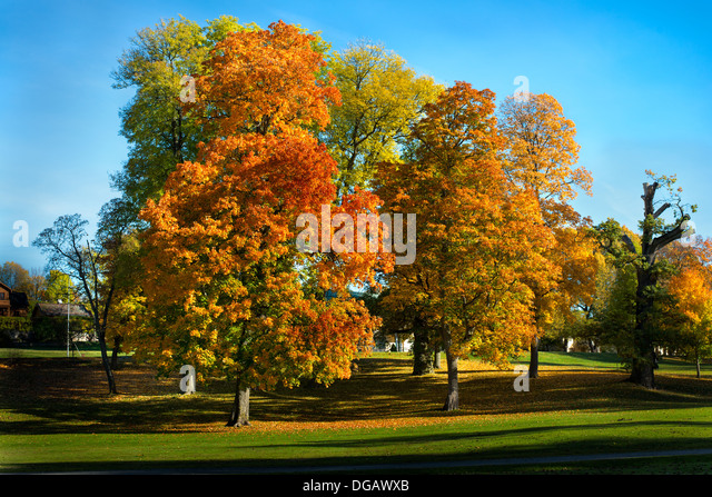 Autumn in Stockholm, Sweden - Stock Image