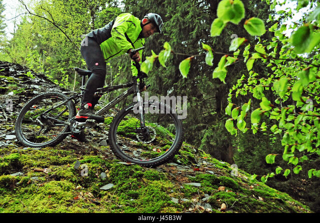 MTB Flow Thüringer Wald, Deutschland - Stock-Bilder