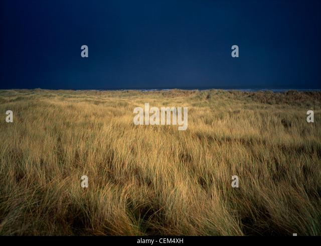 Marram Grass, Baltray, Co Meath, Ireland - Stock Image