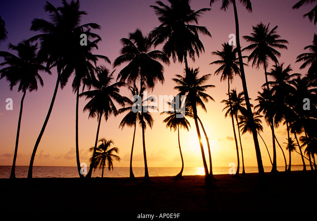 Sun Sets Behind Silhouetted Palm Trees Lining Dominican Republic Beach in Punta Cana - Stock Image